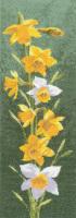 Daffodil Floral Panel - John Clayton