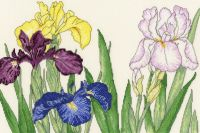 Iris Blooms - Floral Cross Stitch