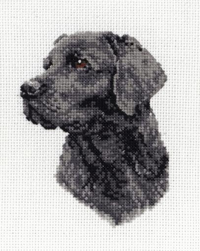 Black Labrador Cross Stitch