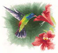 Hummingbird in Flight - John Clayton