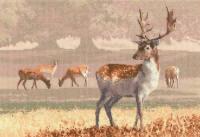 Deer Park - John Clayton Cross Stitch
